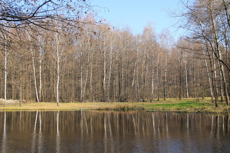 Kamenec lake with some birches and other trees on its banks, Dobra, Czech Republic