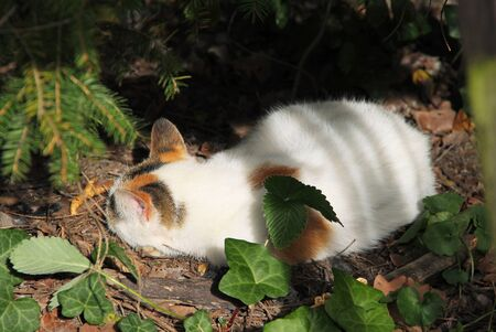 white cat with small spots having rest under the branches of trees in autumn Reklamní fotografie