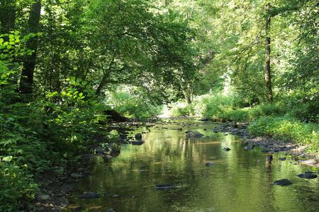 river flowing through the green forest in summer