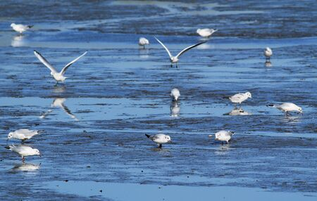 seagulls searching for some food on the bottom of an emptied pond