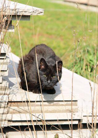 black cat sitting on the pile of concrete parts Reklamní fotografie