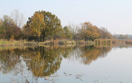 trees with colorful leaves growing on the bank of a pond and reflecting on the water surface in autumn