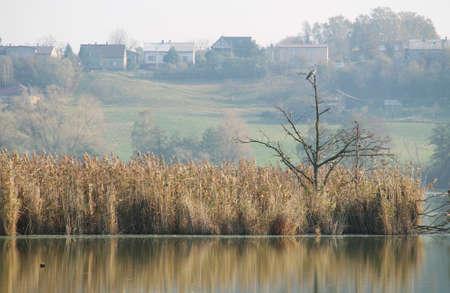 grey heron sitting on the bare tree in the pond in autumn in Bohumin, Czech Republic Redakční