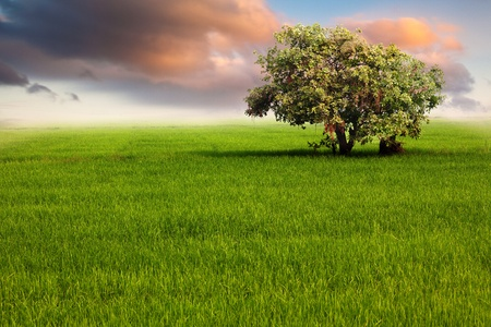 Green Field and Tree with Dramatic Cloud Stock Photo - 12675643