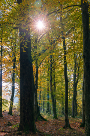 Autumn landscape. The suns rays shine in the autumn forest. 写真素材