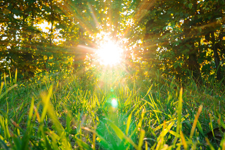 the suns rays shine through the leaves of bushes, trees and green grass 写真素材 - 122166194