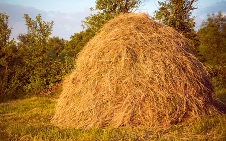 Hay pile as an agricultural farm and farming symbol of harvest time with dried grass straw as a mountain of dried grass haystack. Stock Photo