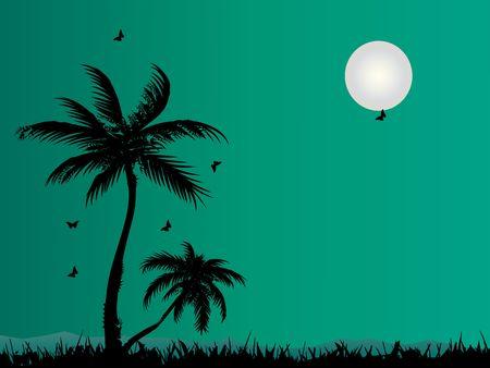 Palms photo