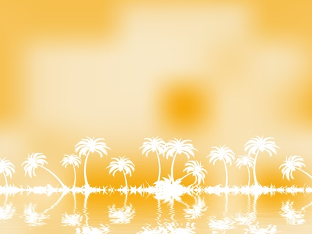 palm tree Stock Photo - 13155100