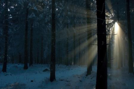winter wood: Morning winter wood