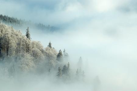 Frosty morning Standard-Bild
