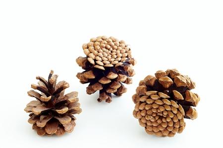 Piny cones Stock Photo - 10031827