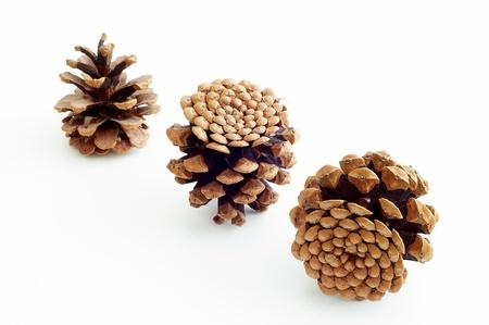 Piny cones photo