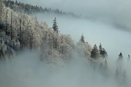 Frosty morning Reklamní fotografie