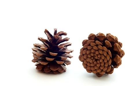 Piny cones Reklamní fotografie
