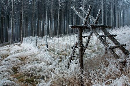 madera pino: Madera de hierba y la valla de madera de pino tel�n de fondo - la madera.