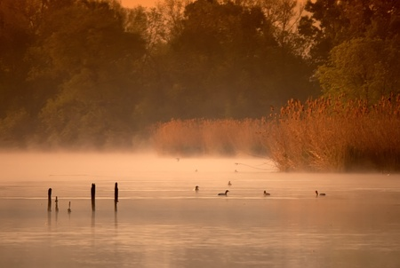 Misty morning on the pond with the birds photo