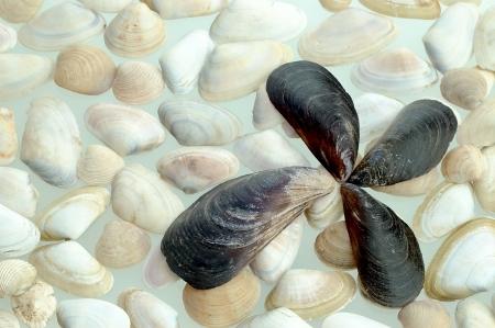 groupings: vari raggruppamenti di cozze in bianco e nero