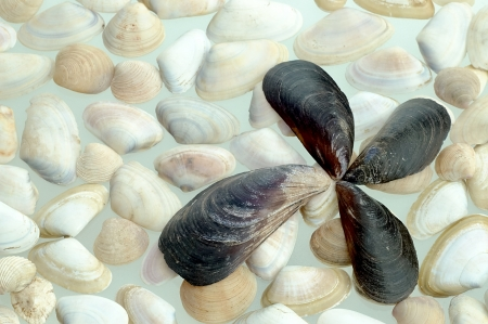 groupings: various groupings of black and white mussels