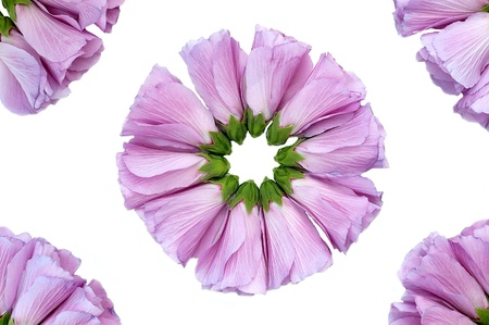hibiscus flowers grouped in a circle photo
