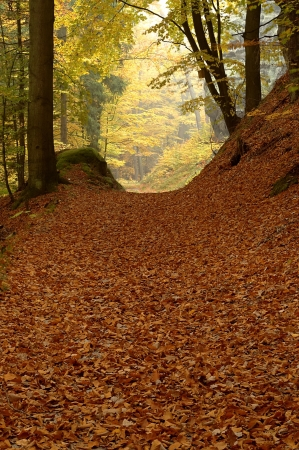 autumn forest road with tree Stock Photo - 16170789