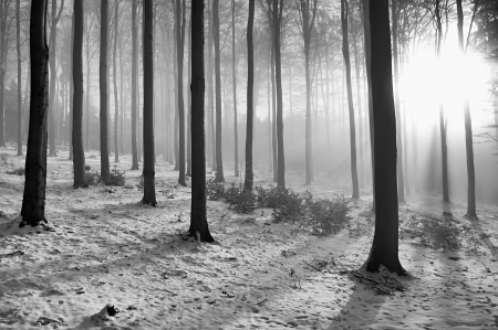Winter beech forest with fog in the background photo