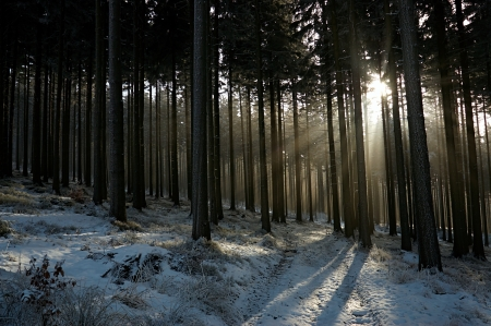 sun s: sun s rays in the winter forest with  forest path