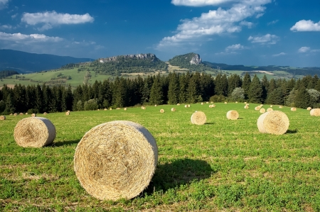 Silage on a meadow with mountains in the background photo
