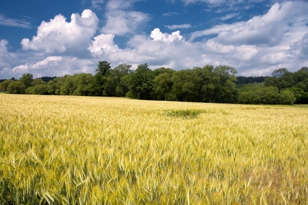 cropland: Cropland with trees in the background