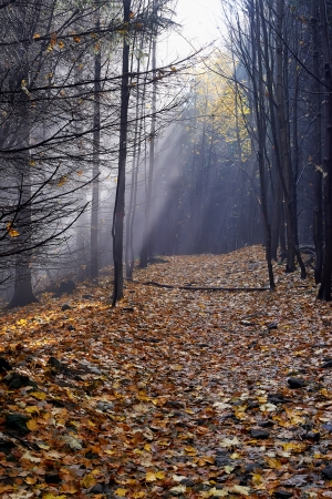 Morning sun in the fog in a forest with leaves Stock Photo