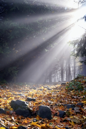 Morning sun in the fog in a forest with leaves photo