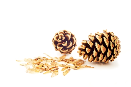 Two pine cone with seeds spores on white background