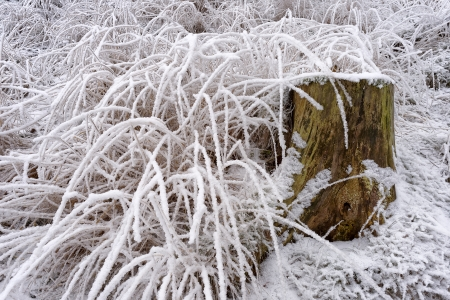 Morning rime on grass forest with an old tree stump in winter