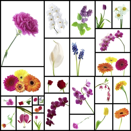Collage of various flowers on white  photo