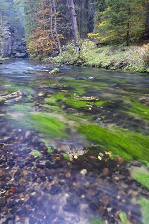 flowing river: Oto�o fluye r�o con �rboles
