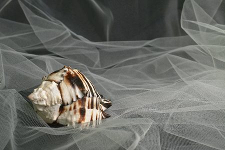 cross linked: View of one sea shell with cross linked background
