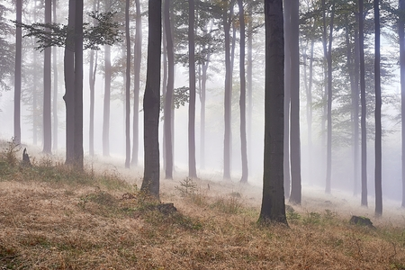 Autumn beech forest with fog in background photo