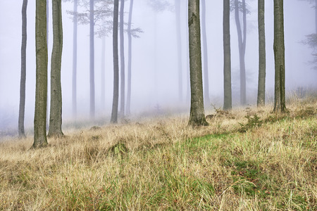 Autumn beech forest with mist in the background photo