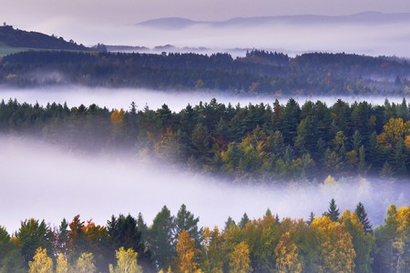 czech switzerland: Foggy morning in the romantic landscape of the Czech Switzerland