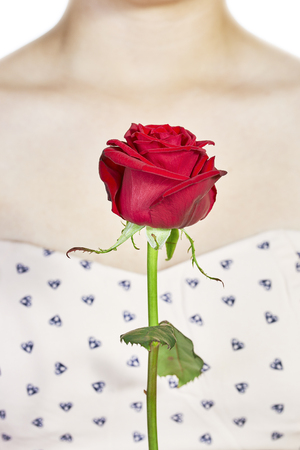 decolletage: Detail view of a red rose with a womans decollete in the background