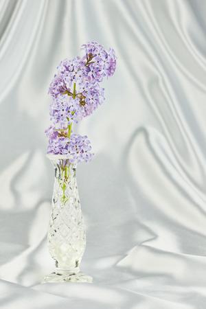 tela blanca: Un florero de cristal con la lila con un paño blanco en el fondo