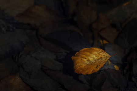 A close-up view of old fallen leaves on the ground