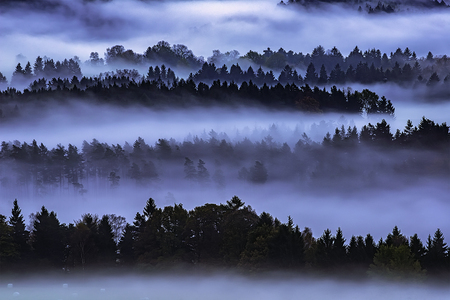 Morning view of mixed forest with fog in Czech Switzerland