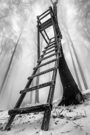 View of a winter beech forest with wooden hunter's seat and fog in the background