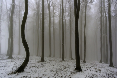 View of winter beech forest with fog on background Stockfoto