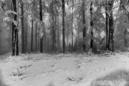 Winter beech forest with fog in the background Reklamní fotografie