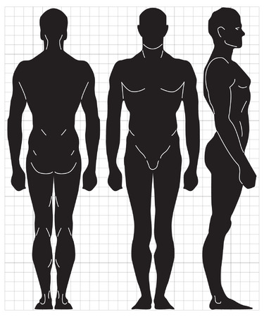 proportions of man: human proportions