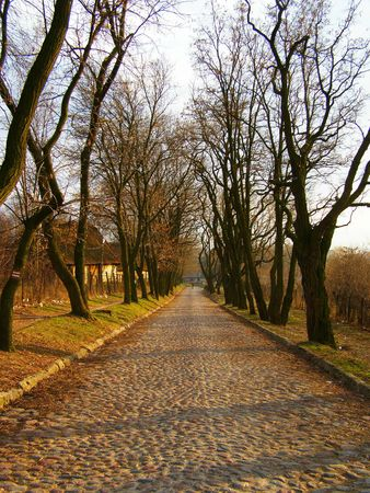 highroad: This is an old rocky way between trees in Lublin City.