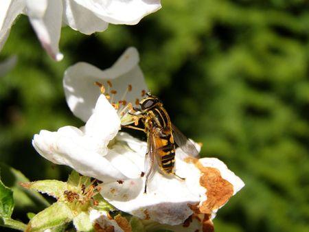 ambrosia: Si tratta di una seduta di api su alcuni fiori.