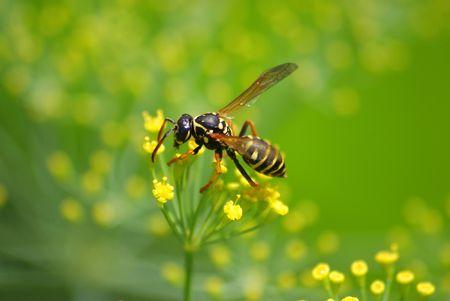 ambrosia: Questo un wasp seduto sulla pianta.  Archivio Fotografico